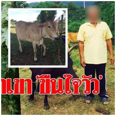 ลุงข่มขืนวัว